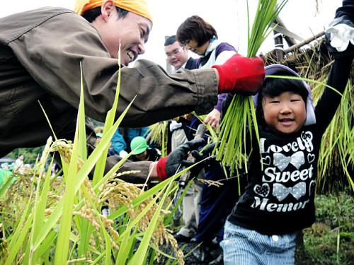 稲刈り 園児たち大はしゃぎ